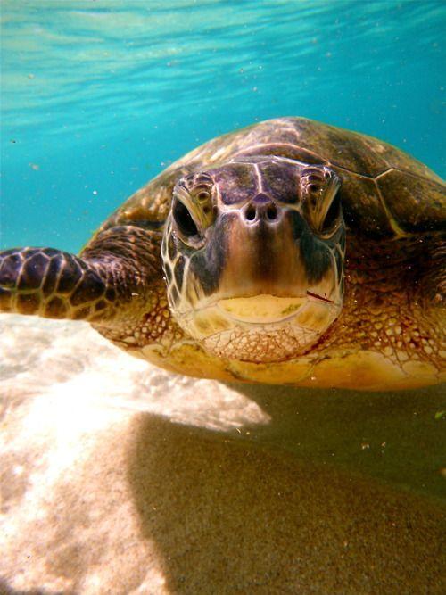 3736 Best Turtles I M A Lovin Images On Pinterest