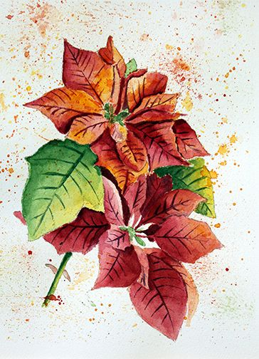 Poinsettias, aquarelle par Annie Collette