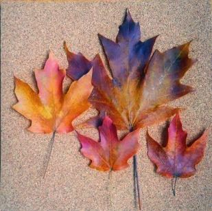 How to Preserve Fall Leaves: Mix 1 cup water with 1/2 cup