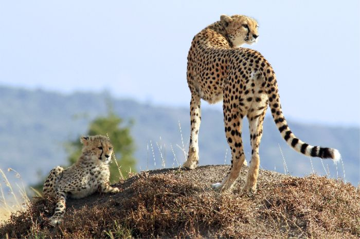 South Africa Holiday Tour Package with Kruger National Park Safari, Johannesburg and Cape Town.