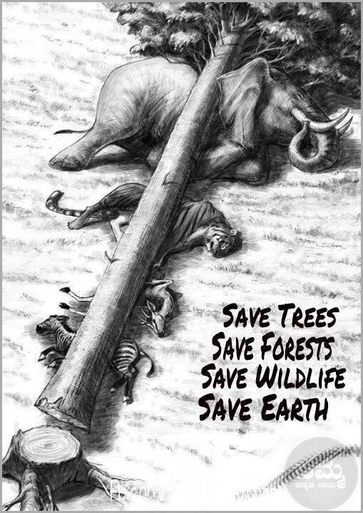 save forests Ten ways to preserve our forests first published in corporate knights, 2005 at first i thought i was fighting to save the rubber trees then i thought i was fighting to save the amazon rainforest.