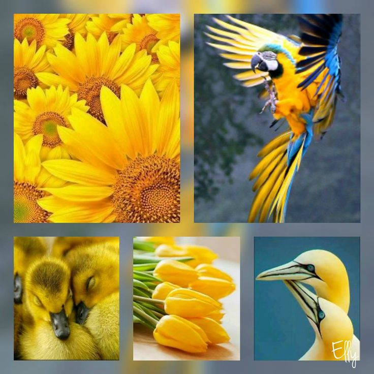 Color Yellow, Mood Boards, Color Palettes, Collages, Color Pallets,  Montages, Collage, Design Seeds, Color Schemes