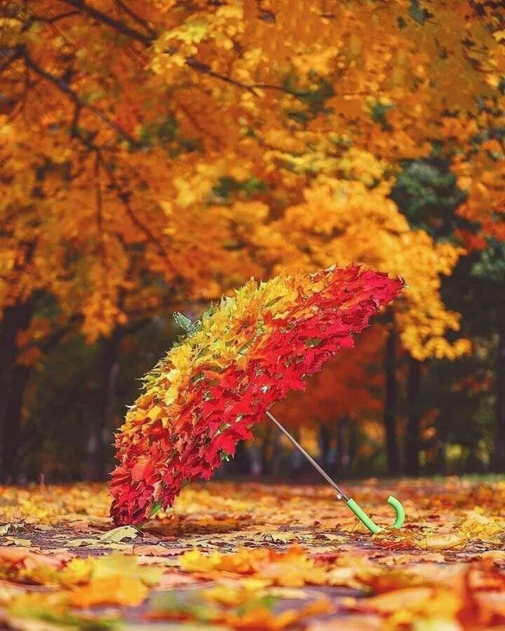 Открытка зонт из осенних листьев на зеленой траве, открытки америка