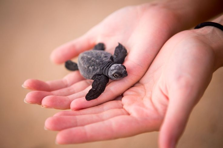 Saving Turtles : 10andThree