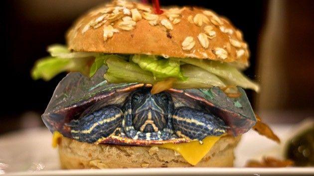 Disfraza a su tortuga de hamburguesa de pollo para poder volar sin separarse   blogs.20minutos.es