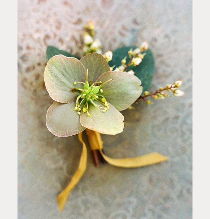 Pieris Japonica and Hellebore with mustard silk ribbon by Sarah Winward ~ we ❤…