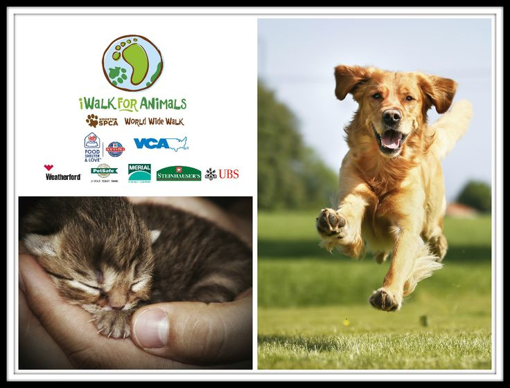 iWalk for Animals!  Whether you are walking, running, trotting or galloping, we hope you'll share your pictures by posting them on our Facebook page. Help us give orphaned, abused and neglected animals a second chance at life. Donate today! www.iwalkforanimals.org.