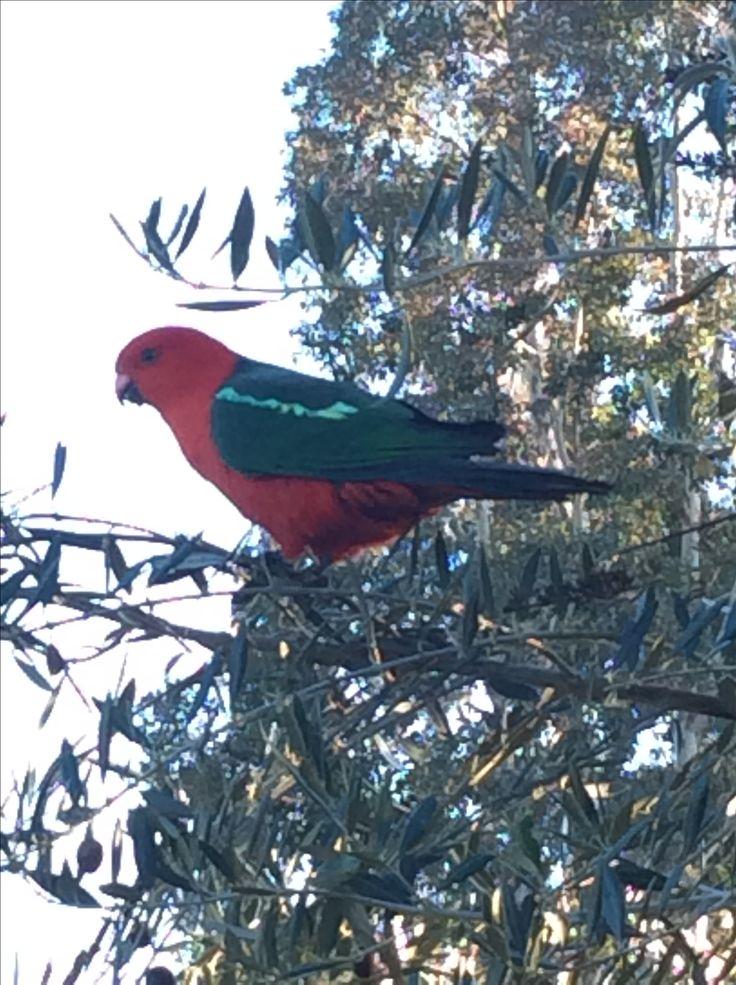 Took a photo of a cute bird today 😊😊