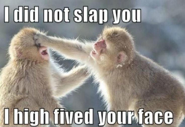 Funny animals, funny pics, hilariousness …For more humorous quotes and funny pictures visit www.bestfunnyjokes4u.com