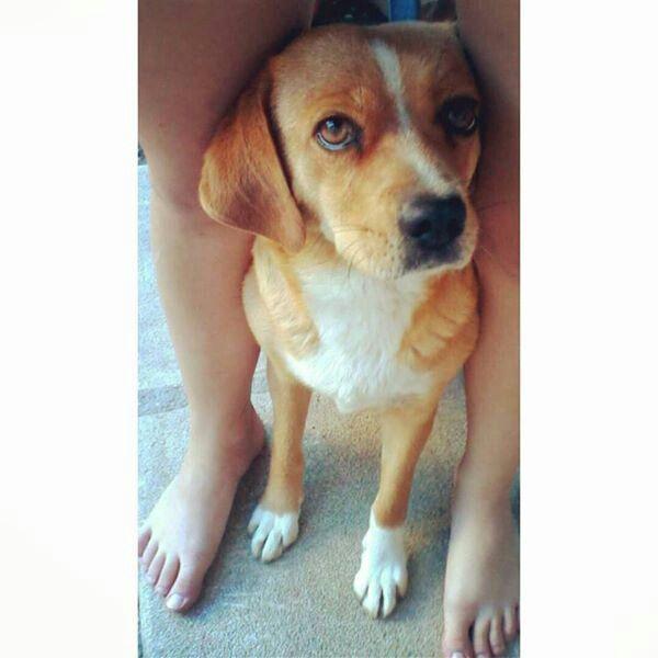 Aww so cutee dog <33
