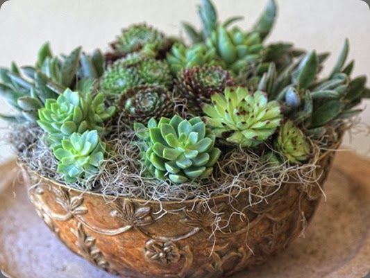 succulents / florali