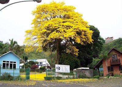 """William Blake sabia disso e afirmou: """"A árvore que o sábio vê não é a mesma árvore que o tolo vê"""". Sei disso por experiência própria. Quando vejo os ipês floridos, sinto-me como Moisés diante da sarça ardente: ali está uma epifania do sagrado. Mas uma mulher que vivia perto da minha casa decretou a morte de um ipê que florescia à frentehttp://www.blogger.com/img/blank.gif de sua casa porque ele sujava o chão, dava muito trabalho para a sua vassoura. Seus olhos não viam a beleza. Só viam o…"""