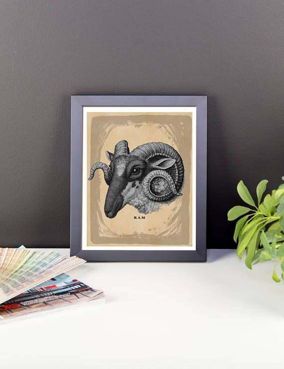 Vintage Ram Sheep Wall Art Print-Shabby Chic Art and
