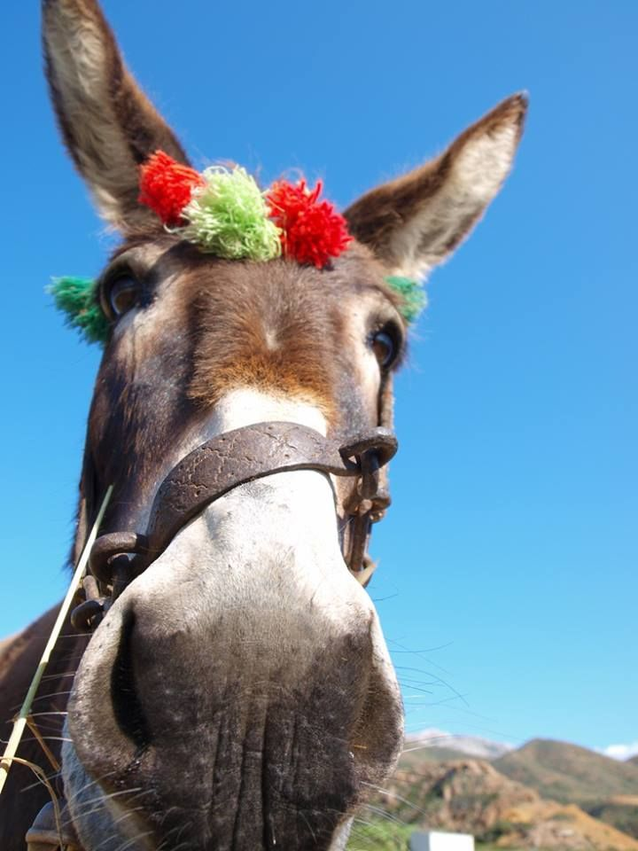 Greece and the donkey