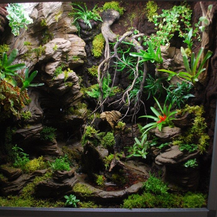 best 20 snake terrarium ideas on