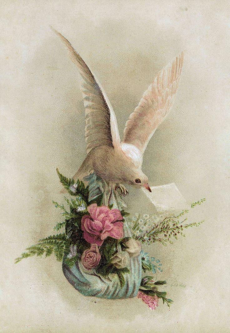 Открытки с голубями на день рождения