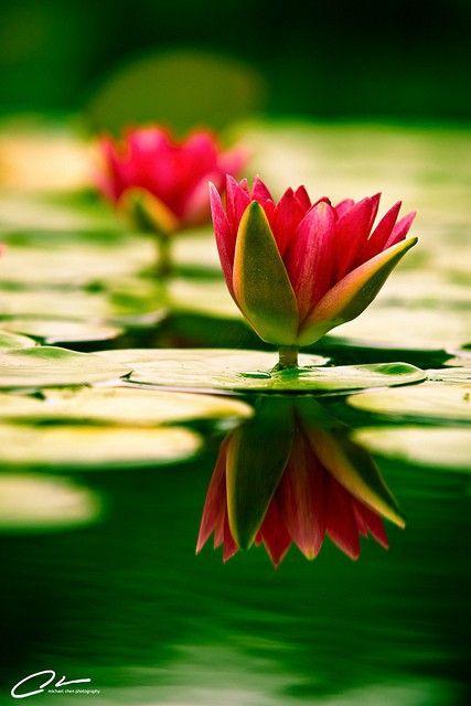 """Lovely and """"tout m'inspire..La forme, les couleurs, et la sérénité dégagée"""""""
