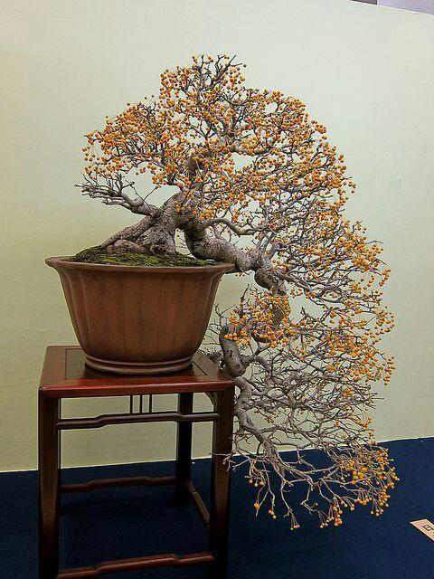 Cute bonsai
