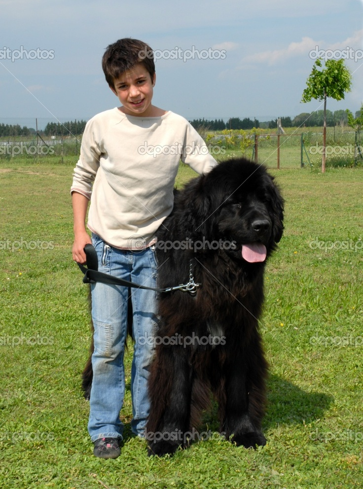 Newfoundland | Newfoundland dog and child | Stock Photo © cynoclub #2231628