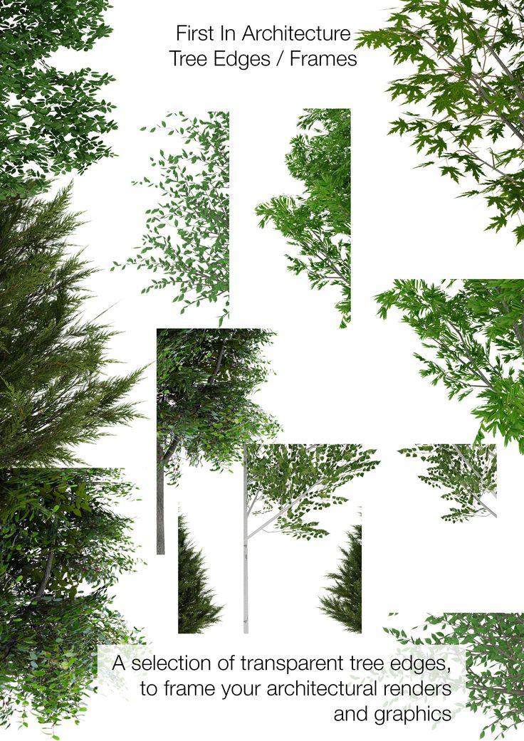 Free Tree Download   First In Architecture