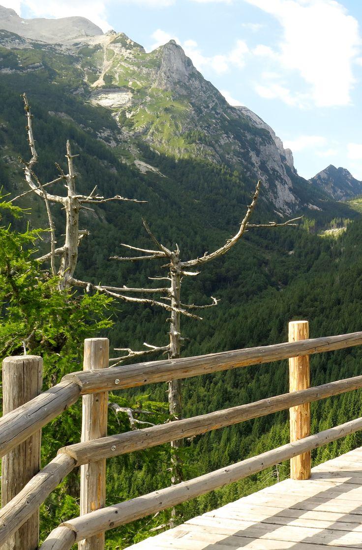 De mooiste bomen ter wereld volgens @nomadenvillager zijn in Madagaskar, Frankrijk, USA en anders.   Maar wat denk jij over de bomen in Julische Alpen - Nationaal Park Triglav in Slovenië (op de foto)? Niet slecht, toch?