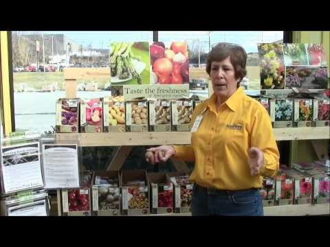 Learn How to Grow Potatoes with Stauffers of Kissel Hill Garden Center's expert in this video. Let us help you be succesfful this year in your #vegeatble #garden. Learn more about Stauffers of Kissel Hill at www.skh.com