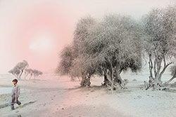 Henrike Stahl Photography