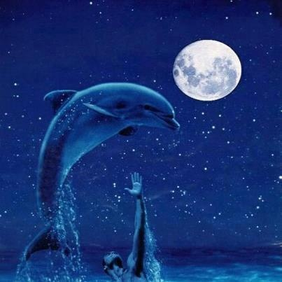 Dolphin And Moon Photo This Was Uploaded By Find Other Pictures Photos Or Upload Your Own With Photobucket F