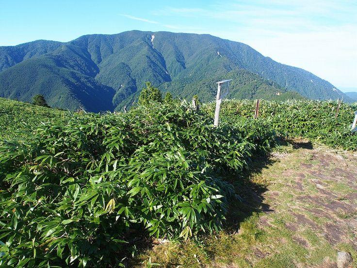 神坂峠登山口から恵那山|中央アルプス登山ルートガイド。Japan Alps mountain climbing route guide