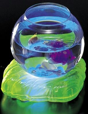 Fantasy fish bowl toy baby einstein toy chest for Fish bowl toy