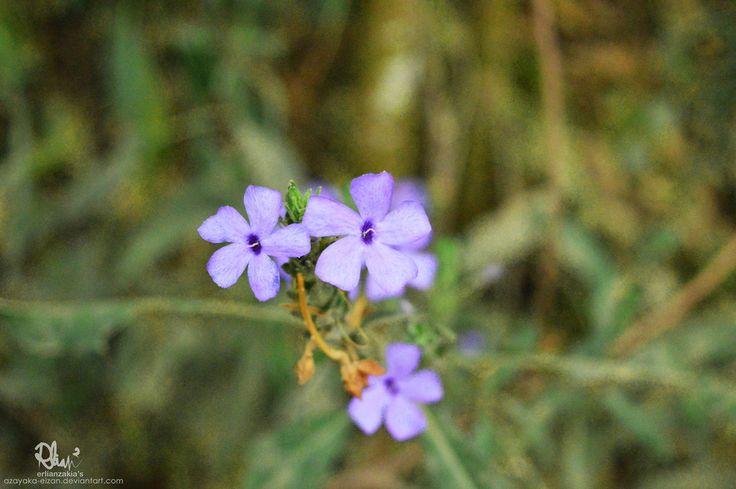 Wild Purple Flower by azayaka-eizan.deviantart.com on @DeviantArt