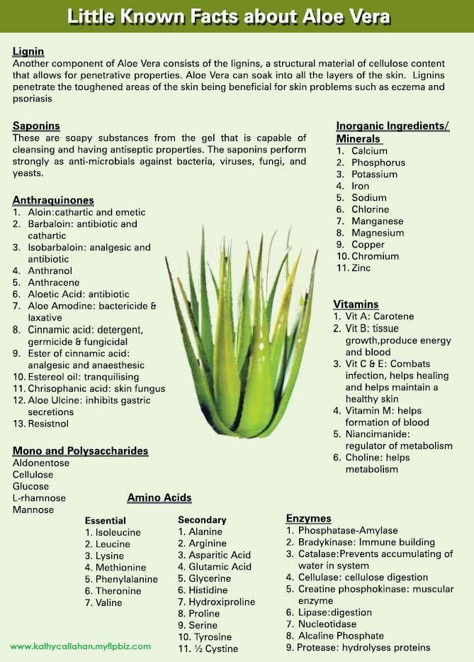 More about the miracle plant, aloe!!                              …