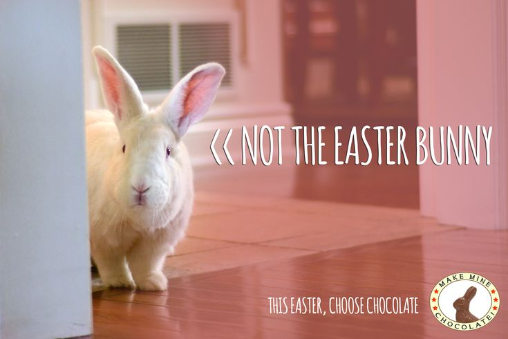 Belinda Says: real bunnies are not for easter.  We agree with her.