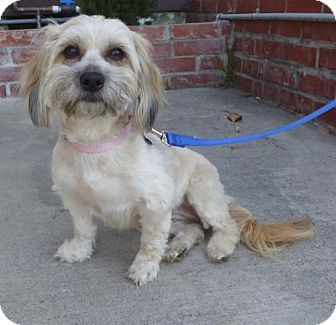 Pictures of Paisley a Maltese/Terrier (Unknown Type