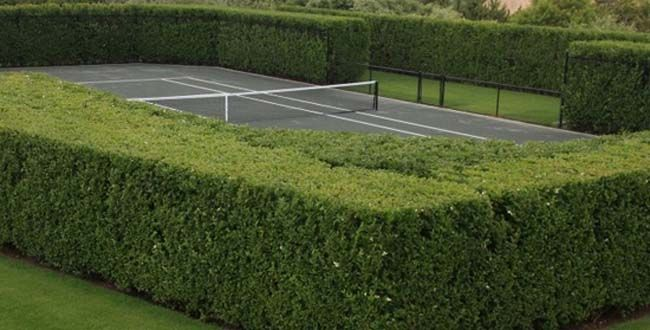 A #tennis #court bordered by tall green hedges. Check more at www.northcarolinahomes.com