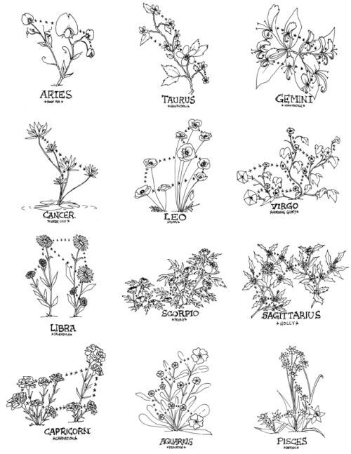 """zoazig: """"Floral Constellations Small experiment with flowers and sun signs. A few hours each, sharpie on paper. Available here on my RedBubble Aries-Sweet Pea, Taurus-Hawthorn, Gemini-Honeysuckle, Cancer-Water Lily, Leo-Poppy, Virgo-Morning Glory,..."""