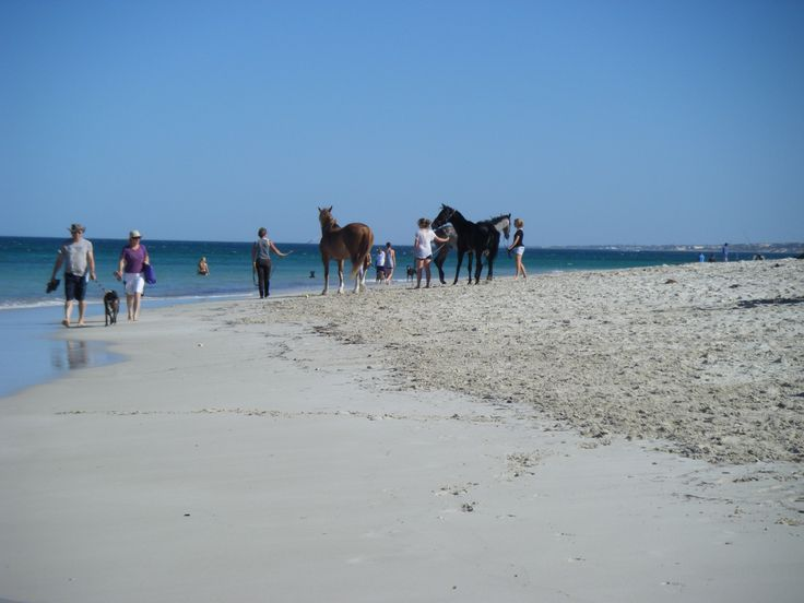 I love to take visitors (or just Toby) to the #Horse and Dog Beach near #Hillary's Boat Harbour #Perth #Western Australia