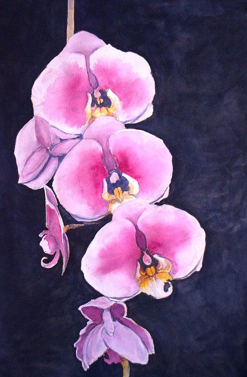 """orchids"" watercolor by Julie Christopher"