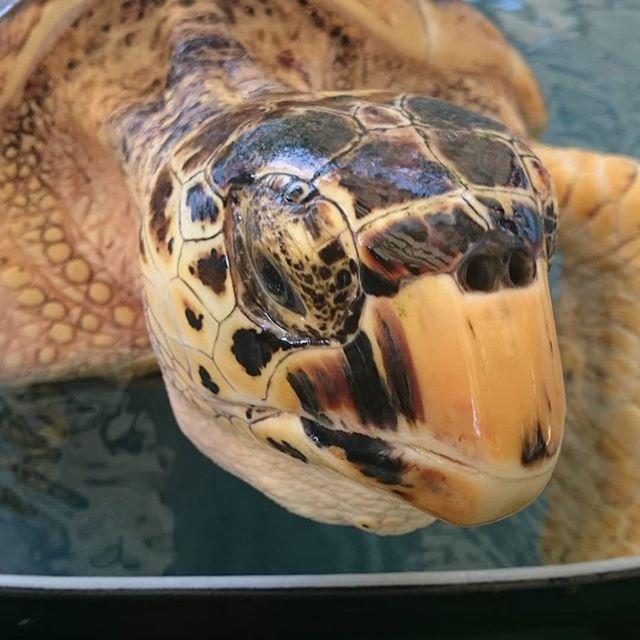 Sid the #turtle  says Hi