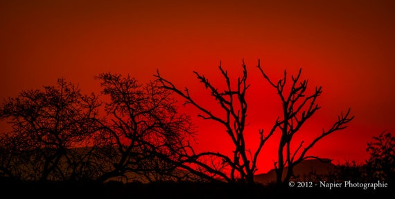 """""""The African Fire"""" by NapierPhotographie, $ 115.00 - (original fine art giclee, limited series)"""