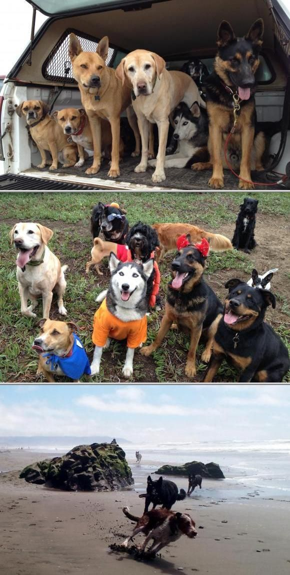 ABC Dogs provide basic obedience training as well as dog walking among others. Their dog obedience classes  are being done internally with our any sub contractors for reliability and high quality service.