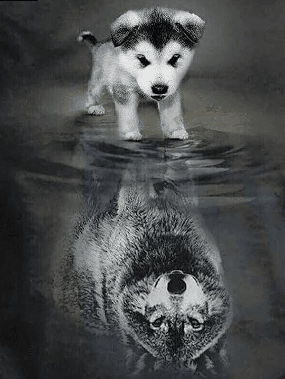 Dog to Wolf Square Diamond Painting #diamondpaintingdiy # 5ddiamondpainting #pai …