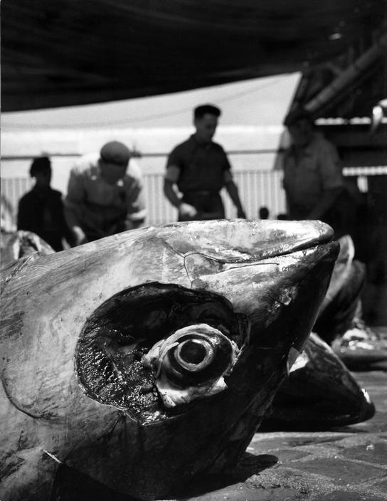 Herbert List ~Tonnara = Tuna Catch~ Favignana, Sicily, Italy,1951 #lsicilia #sicily #favignana