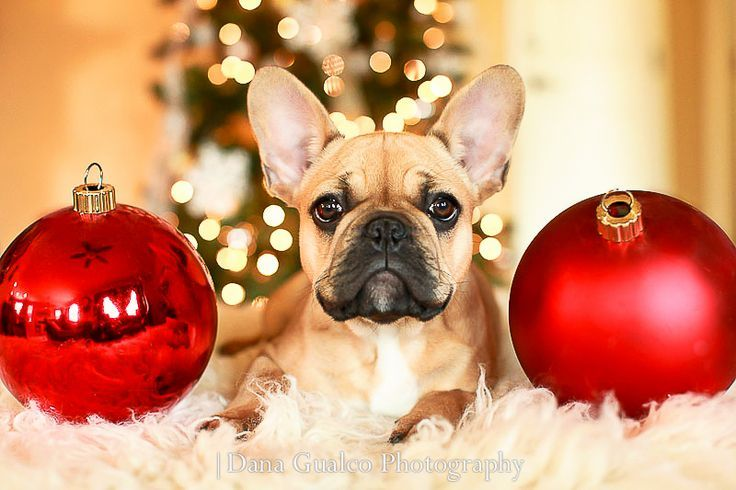 How To Photograph Your Dog Holiday Pictures With Your Dog French