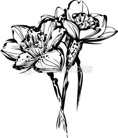 Imgs For > Narcissus Flower Tattoo Black And White