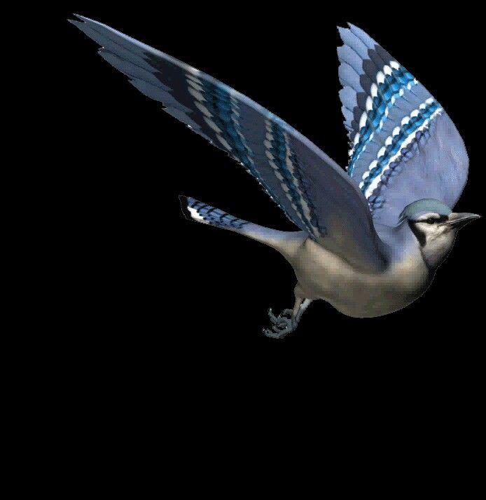 Птицы с анимацией