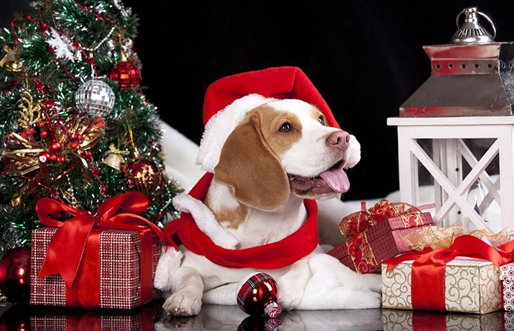 Are you going out of town over the #ChristmasHoliday? Find out how Rilten Kennels can bring Comfort and Joy for You and Your Pet During the Holidays > Visit https://goo.gl/98ZDgk  or  Call 1300 339 170 #PetBoardingEpping #PetBoardingBundoora