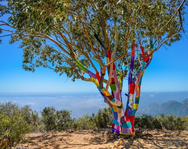Yarn Bomb by Aquaholic