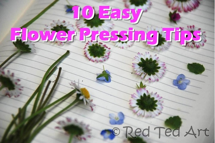 10 tips on how to Press Flowers - including the microwave method! Who would have thought!