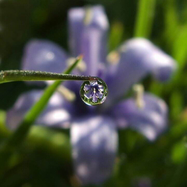 Seeing through a water drop